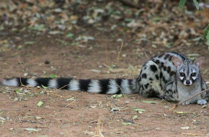 Les animaux carnivores résidents autour du lac Sidi Salem