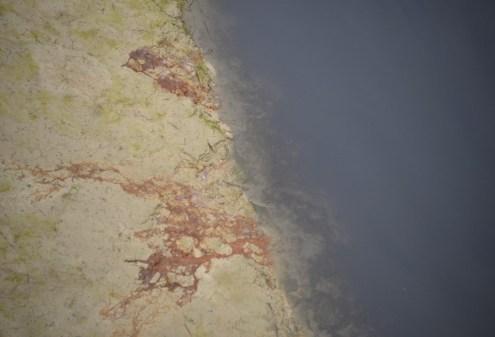La rivière Medjerda polluée par le margine