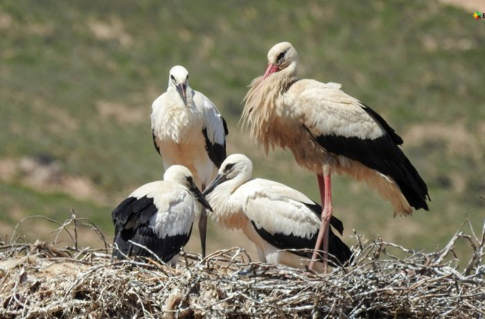 Les oiseaux migrateurs nicheurs qui nichent autour du fleuve Medjerda