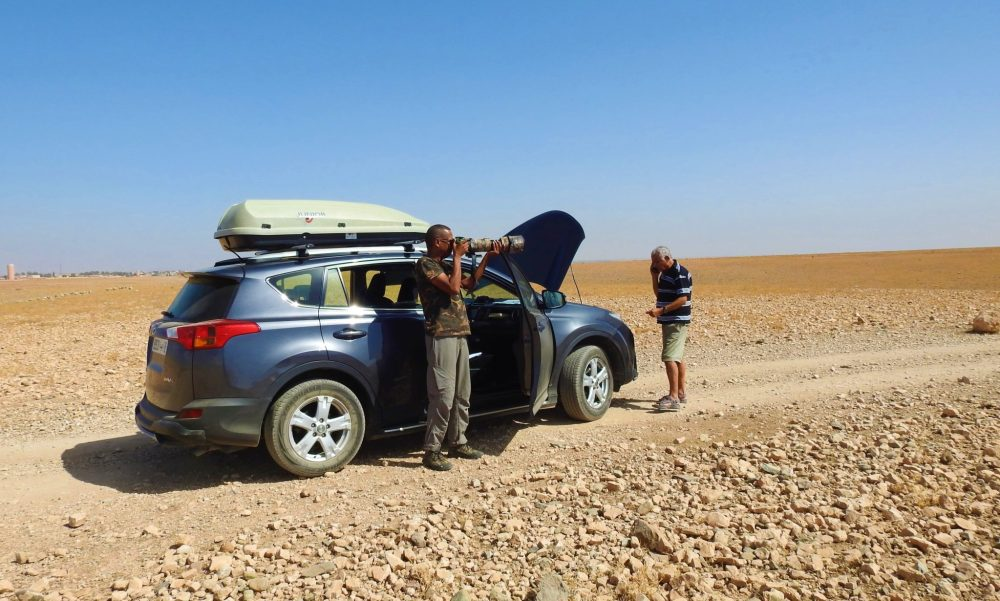 Observation de la Pie du Maghreb a l'aide de jumelles