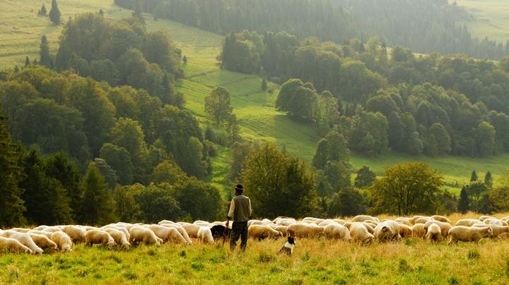 Paysage naturel et bétails
