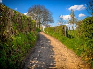 Haie ornementale: corridors écologiques