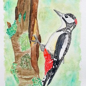 2020 - 25. Lesser Spotted Woodpecker
