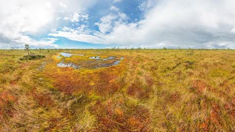 Soomaa National Park Bog Walking
