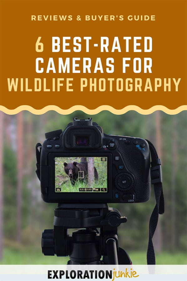 Cameras for Wildlife Pinterest Image