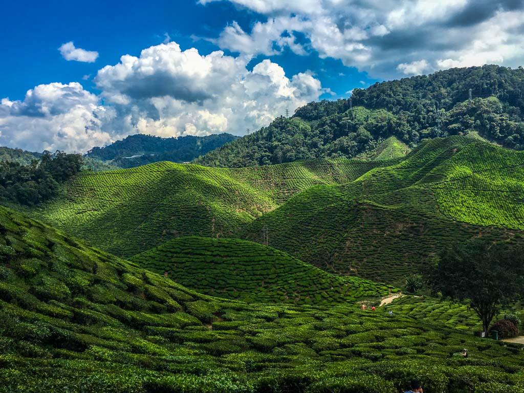 Cameron Highlands - Die Teeplantagen in den Bergen von Malaysia