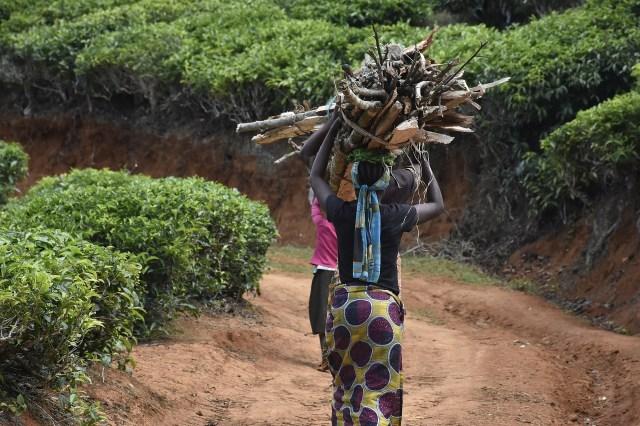 women fetching firewood