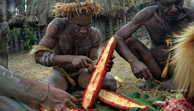 Dani tribe and Lani tribe inhabit West Papua's Baliem Valley, Real Lifetime Experience to Visit Asmat, Dani and Korowai Kombai TreeHouse Tribe in West Papua. Indonesia
