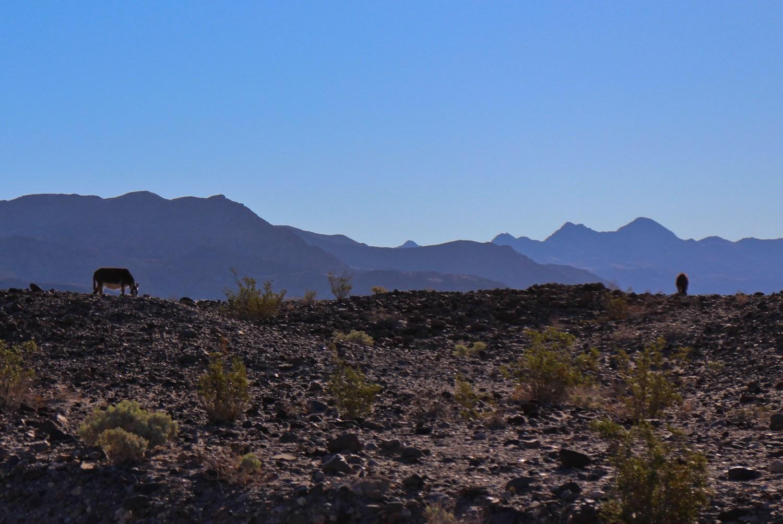 Death Valley 2015 16583072591