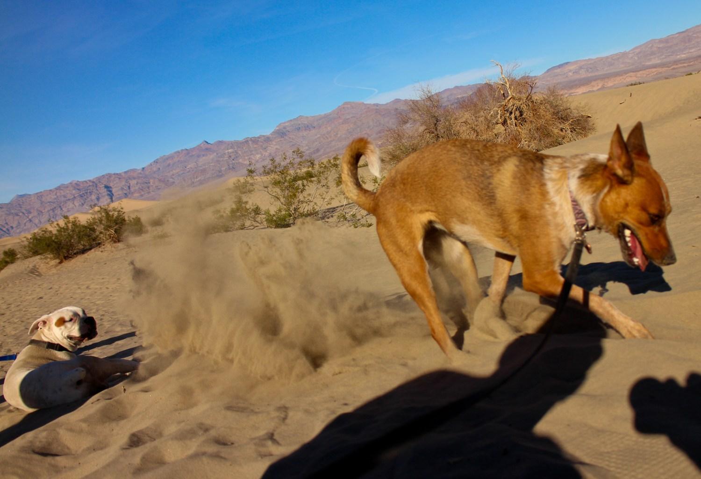 Death Valley 2015 16584187465