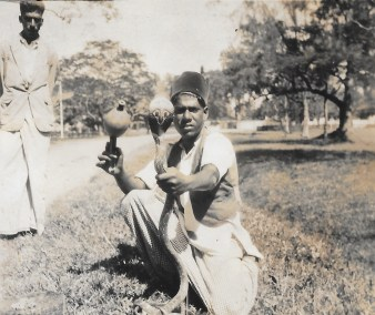 Tame Cobra, Colombo 1937