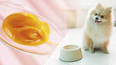 manuka honey for dogs