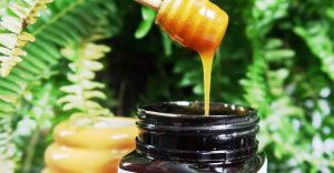 Why Do You Need To Pay Attention To The Manuka Honey's UMF Level