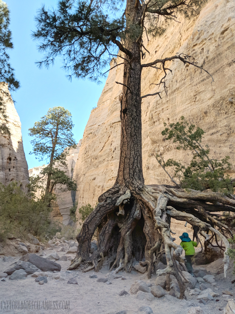 canyon tree tent rocks