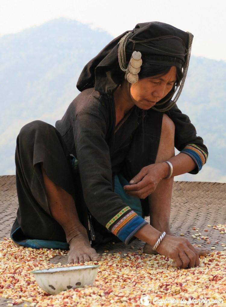 Femme Akha pixor qui trie le grain en habit traditionnel