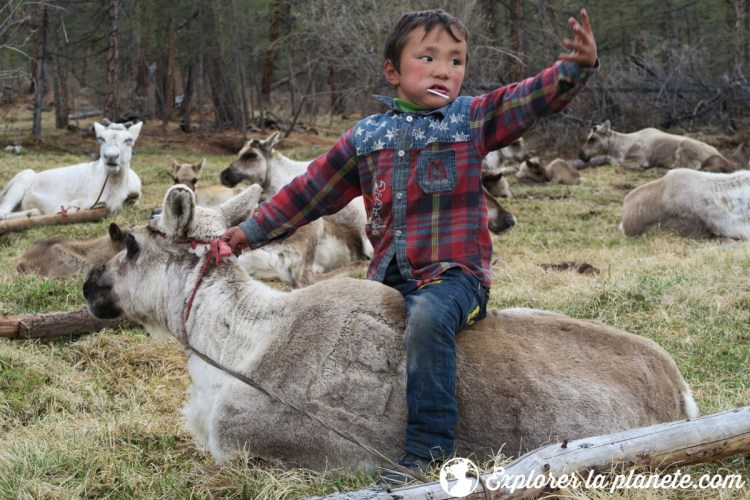 Garçon sur le dos d'un renne dans une tribu Tsaatan au Nord de la Mongolie