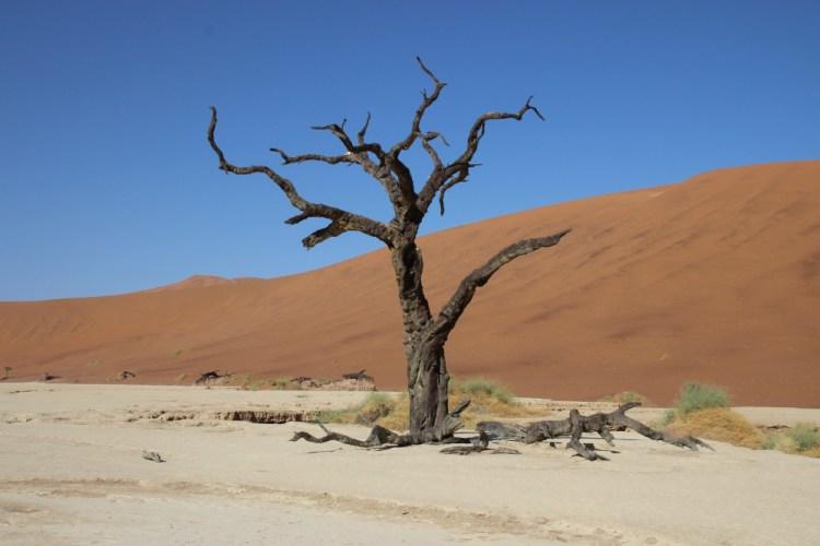 Arbre fossilisé dans le désert de Dead vlei en Namibie destinations en dehors des sentiers battus