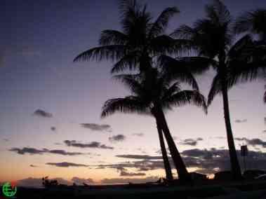 Palms with purple skies Hawaii