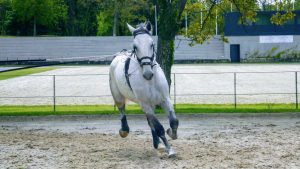 Lipizzan Horse running in the farm