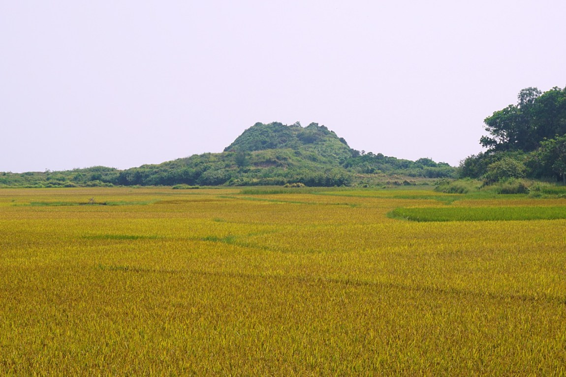 A cut rice field on the South of the Co To Island