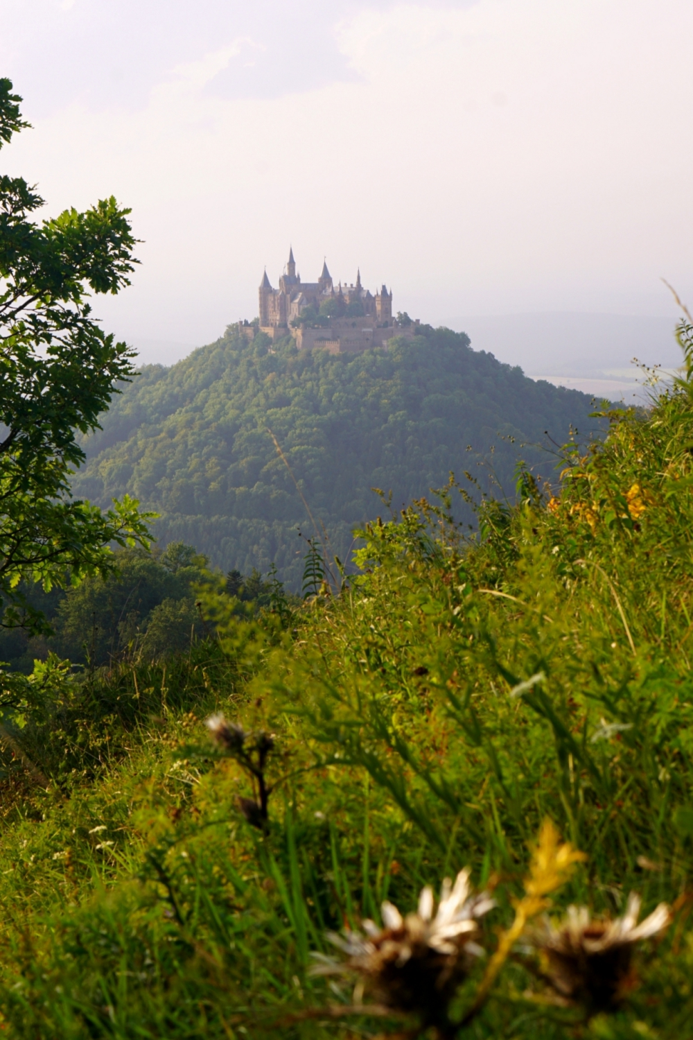 Hohenzollern Castle seen from a hill with wild flowers