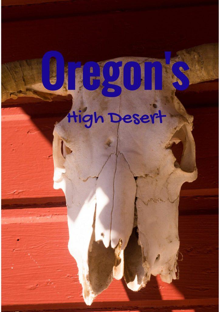 Steer Skull High Desert Oregon