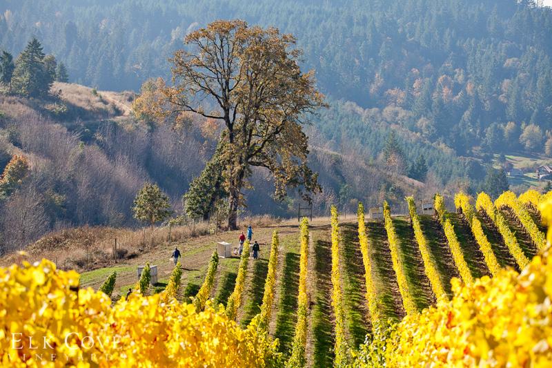 oregon's wine country