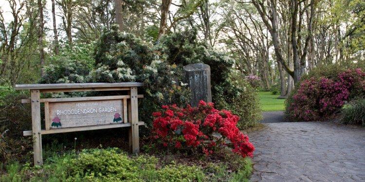 Hendricks Park Eugene