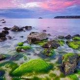 Algen im Sonnenuntergang 0508
