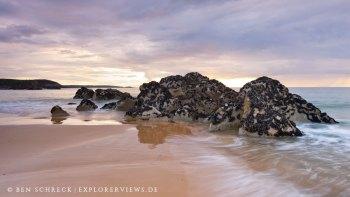 Muschelfels am Strand