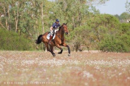 Pferd im Galop auf Wiese