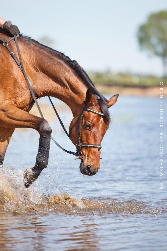 Pferd im Wasser Loire