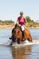 Pferd in Loire