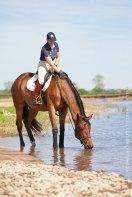 Pferd Loire