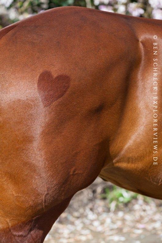 Pferd mit Herz