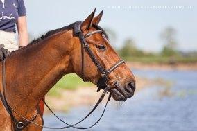 Pferde Potrait