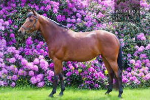 Ossia RH Horse