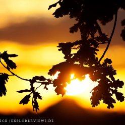 Autumn Sun Oaks