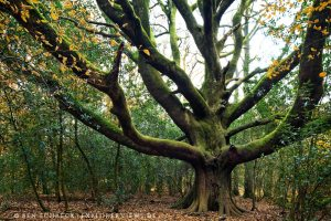 Bäume etre de Voyageur Bretagne