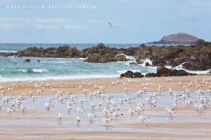 Fotos der Bretagne Möven am Strand Bretagne