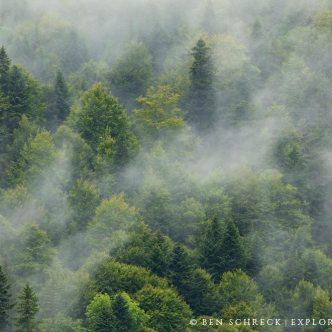 Nebel Wald Auvergne