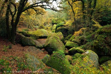 Wald von Huelgout Bretagne