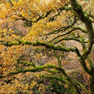 Bretonischer Herbst Wald