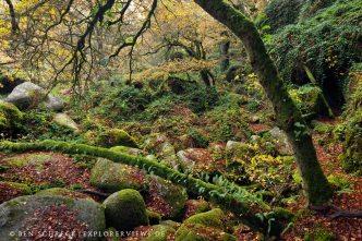 Foret Bretagne Autumn