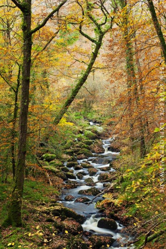 Herbstwald Bretagne