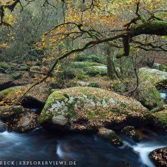 Herbstwald in der Bretagne