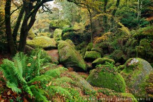 mystischer Zauberwald Huelgout Bretagne