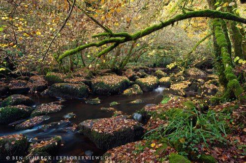 Sous bois bretonne