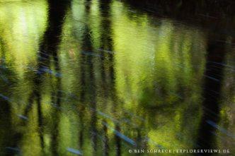 Wasser Spiegelung im Wald