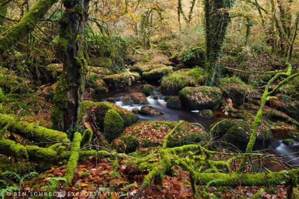 Wilder Wald Bretagne